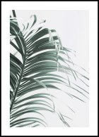 Green Palm Leaf Poster