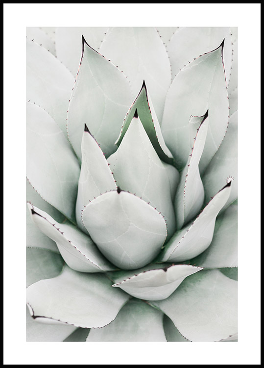 Green Agave Poster