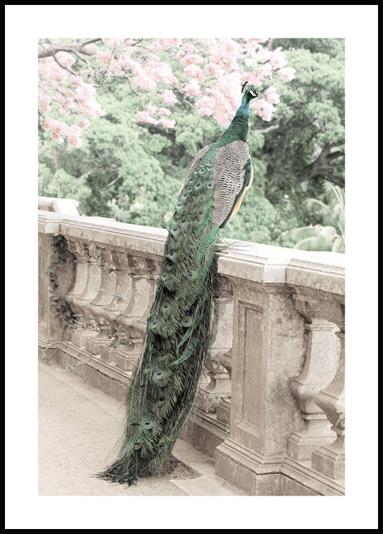 Green Peacock Poster