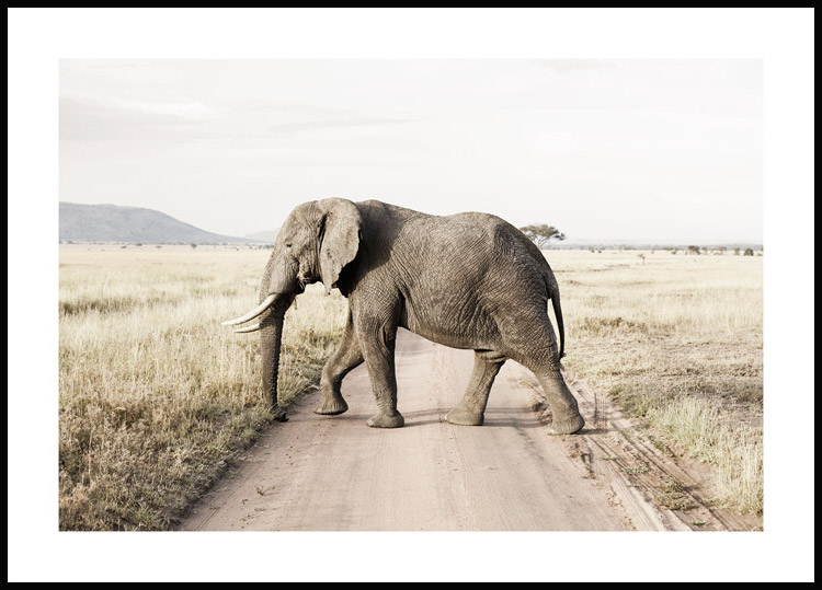 Elephant on the Road Poster
