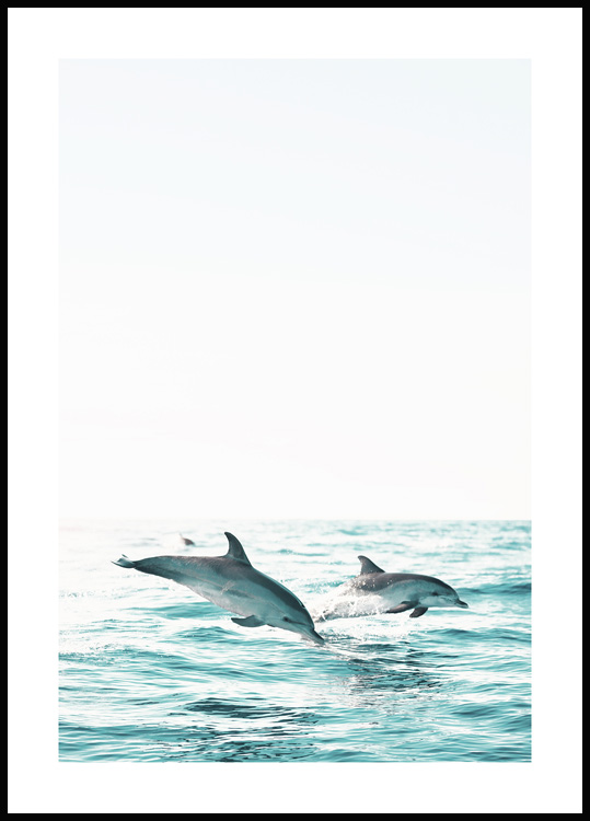 Two Dolphins Poster